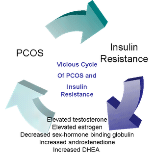 14 insulin-resistance-pcos