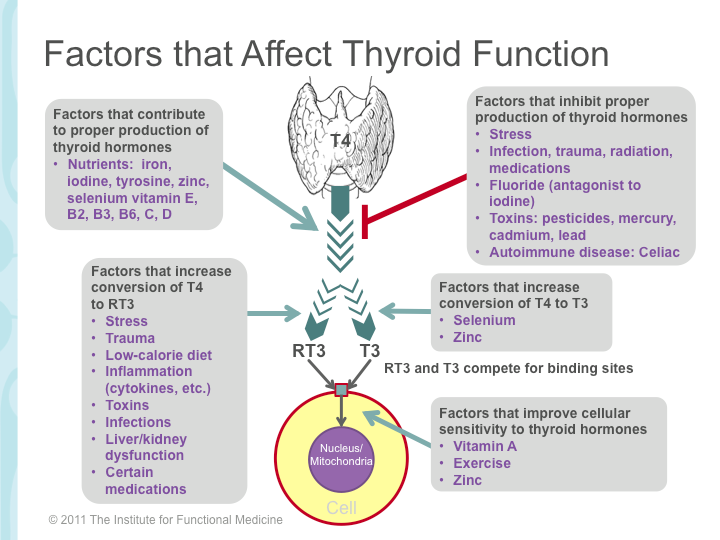 4 Factors that affect thyroid