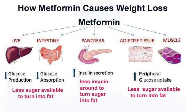 23Metformin Weight issues